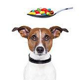 Витамины и добавки для животных