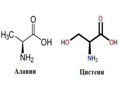 Заменимые аминокислоты: виды, функция, синтез