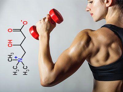 L карнитин для энергии, спорта, похудения