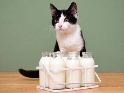 Молоко безлактозне: популярний тренд або реальна користь