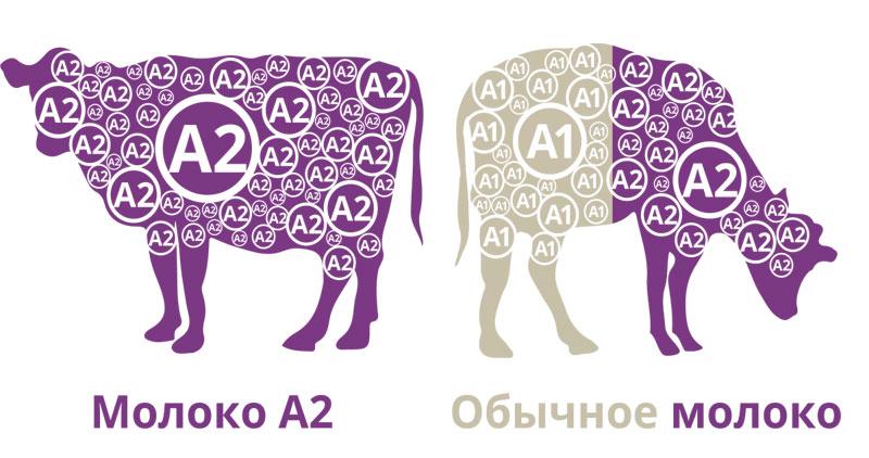 Молоко категорії А1 і А2